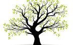 TEST | Vali puu ja saa teada, milline on sinu iseloomu põhiolemus