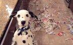 Lemmikloomad, kes tegid pahandust