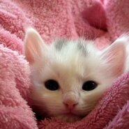 Ämaris levitavad kulutulena seenhaigust elu ja surma vahel kõikuvad kassid! Elanikud paluvad abi!