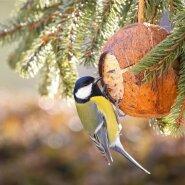 Talvel toidame linde