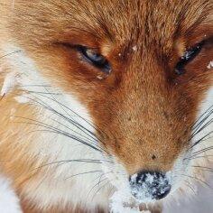 IMELISED FOTOD | Eesti loodusfotograaf tabas telefoniga metsloomi ja -linde nende loomulikus olekus