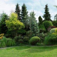 Kuidas luua okaspuude abil varjunditerohke aed