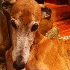 Südantlõhestav kiri: mida tundis omanik, kui pidi eaka koera magama panema?