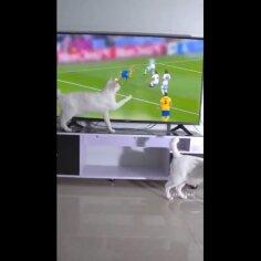 LÕBUS VIDEO | Kass peab teleris toimuvat videomänguks