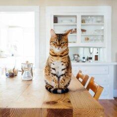 Kass ei soovi teha häda oma liivakasti? Kuus põhjust, miks see võib nii olla