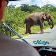 Seiklus Sri Lankas: kellele siin teel jõud ja õigus kuulub, võib järeldada mitmel pool ümber lükatud liiklusmärkidest