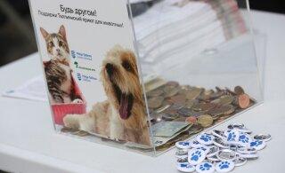 В Таллинне стартует благотворительная кампания в пользу бездомных животных