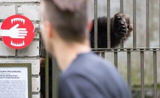 Hispaania loomaaed lasi elanikud puurist välja