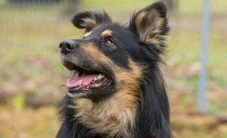 Как выбрать собаку для пожилого человека и какие породы подойдут лучше