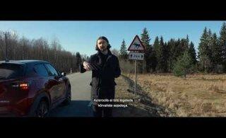 Arvestuslikult juhtub aastas Eesti teedel ligi 10 000 metsloomaõnnetust