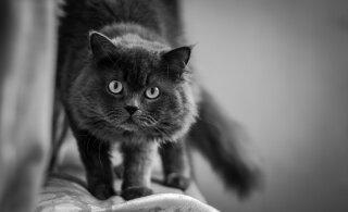 Kass jõllitab seina või vahib tühjusesse: mida ta seal näeb?