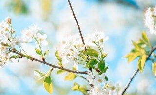 See kevadel ja suvel inimesi kimbutav haigus mõjutab sageli just noori! Jagame näpunäiteid, kuidas tüütavaks muutunud sümptomeid leevendada