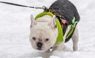 Житель Ласнамяэ негодует: владельцы, выгуливайте собак подальше от домов и детских площадок. Достало!