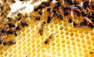 Euroopa mesinike häving avas turu Hiina tehismeele