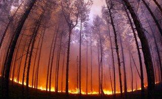 KIIRÜLEVAADE | Metsasid laastavad aina enam loodustulekahjud. Miks nii?