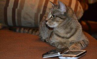 Лучшие развлекательные приложения для котиков и их хозяев
