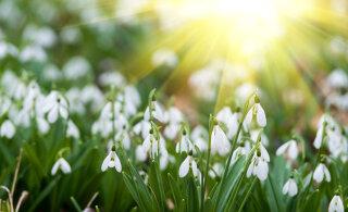 Täna on kevadine pööripäev: 10 asja, mida tasub teha, et kindlustada edukas kevad-suvi