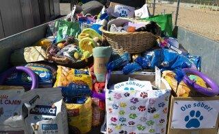Hakkajad noored kogusid kodututele loomadele haagisetäie annetusi
