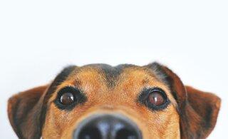Пес в Ухани три месяца ждал своего хозяина, который умер от коронавируса. Собака отказывалась уходить из больницы