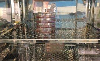 HARUKORDSED FOTOD | Ainus Eesti labor, kus hoitakse elus koroonaviirust