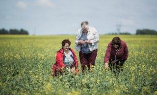 Teadlased ja põllumehed leiavad looduslikke vahendeid kahjurilembese rapsi kaitsmiseks