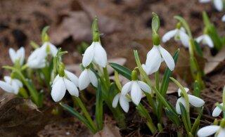 Öösel algas kevad! Nädalavahetus paitab kuni 9 kraadiga