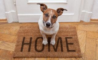 Lemmikloomaga elamispinna üürimine on paras peavalu: loomad on teretulnud sajast ainult ühes üürikorteris