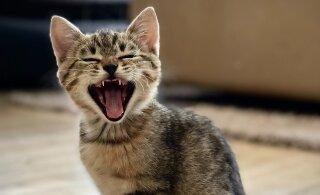 Vähem stressi! Just need viis asja ajavad kassi pingesse