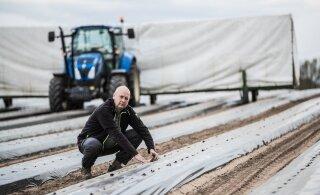 Как производители клубники справляются без украинцев? Работников для посадки нашли, но судьба урожая под вопросом
