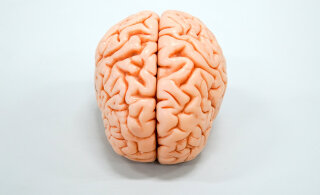 Need 14 kehva harjumust põhjustavad aju kiiremat vananemist