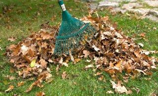 Жители Хааберсти не проявили большого интереса к вывозу листьев по сниженной цене