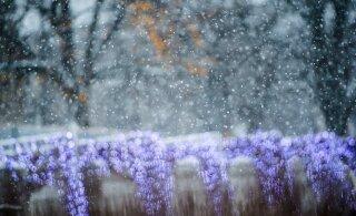Põhja-Soomes võib sel nädalal langeda esimesi lumehelbeid, Eestis võib kohati esineda öökülma