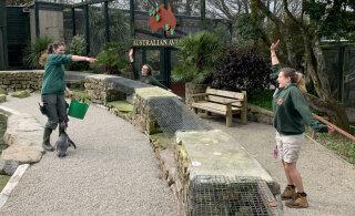 Сотрудники зоопарка решили самоизолироваться среди животных