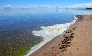 ФОТО | С каждого по евро — будет целый остров! Эстонец готов продать жителям Латвии остров Виирелайд