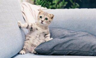 ТЕСТ | Выбери самого симатичного котика — и он расскажет о тебе всё!