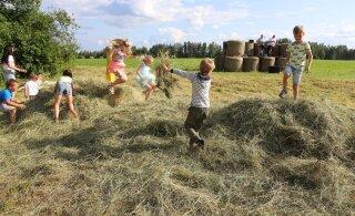 FOTOD | Avatud talude päev löödi Maamehe golfiga avatuks