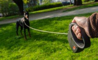 Arstid on täheldanud koerarihmaga seotud vigastuste teket