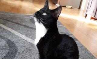 Naljakas VIDEO | Rõngassaba on kass, kellel isikupärast puudust ei tule