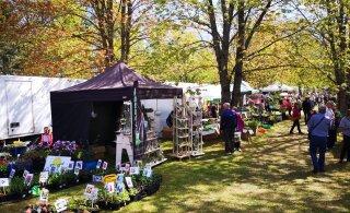 Садовая ярмарка в Тюри: желающих торговать — тьма, все не вместились