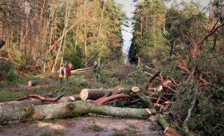 Kas 2005. aasta jaanuaritorm mõjutas Rootsi metsalinnustikku?