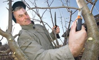 SPETSIALIST SOOVITAB | Kuidas valida õigeid lõikeriistu viljapuude lõikuseks?