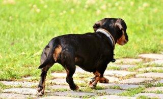 Героическая собака громким лаем спасла хозяев от пожара. Но сама погибла в огне