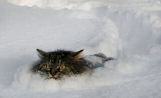 Погода в последнюю неделю марта: неужели зима вернется?