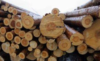 Mullune raiemaht Eesti metsades kasvas varasemaga võrreldes 1,5 miljoni tihumeetri võrra