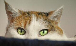 8 üllatavat fakti: kui palju sa oma kassi kohta tegelikult tead?