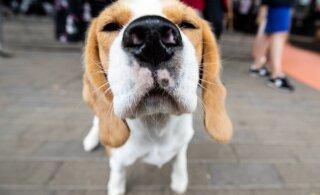 Uuring: koer hoiab omaniku südame korras
