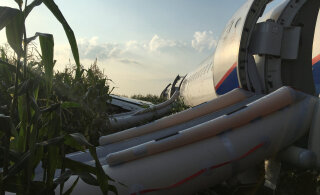 """""""Столько чаек я не видела даже на Балтийском море"""" Эколог два года назад предсказала аварию самолета из-за свалки в подмосковном Жуковском"""