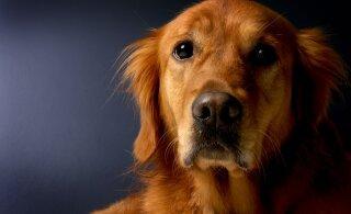 Südamlik VIDEOLUGU | Mees imestas, miks koer öösiti ei maga ja teda ainiti jälgib, siis selgus südantlõhestav tõde