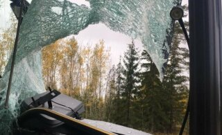 ФОТО: В латвийский автобус на ходу запрыгнула косуля, пострадали водитель и пассажиры