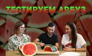 ВИДЕО | Екатерина Цапакова сдала экзамен по выбору арбуза. Как выбрать сладкий и спелый арбуз